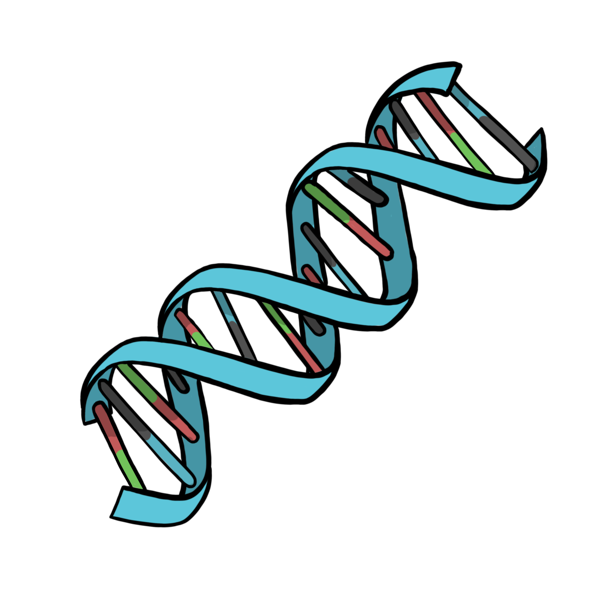 Drawing of DNA